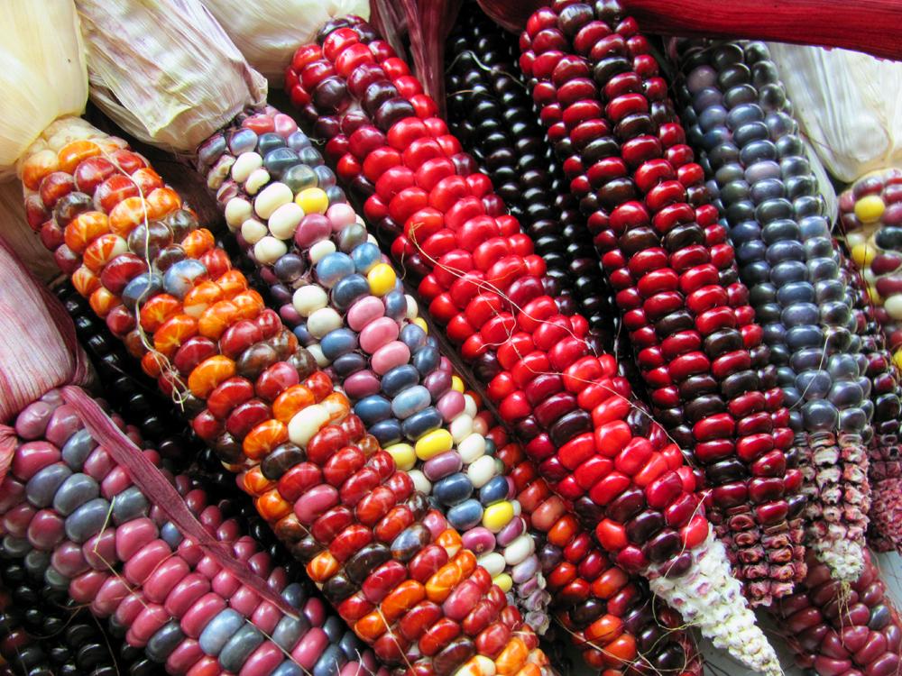 Kukuřice Malované hory