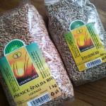 Zrno pšenice a žita