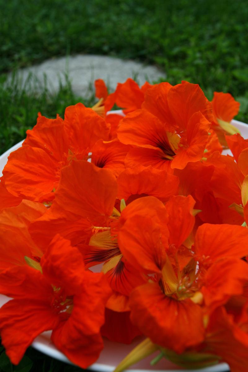 Květy lichořeřišnice